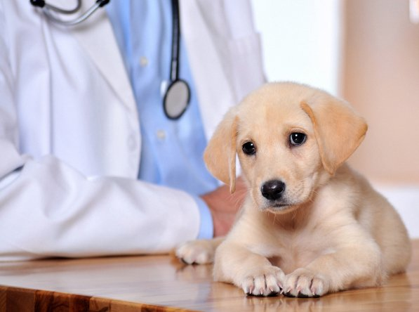 Portland, OR Pet Clinic Insurance